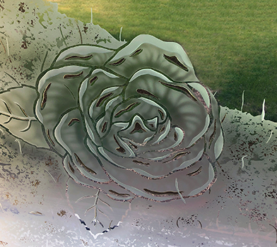 Carved-rose-stained-glass-closeup